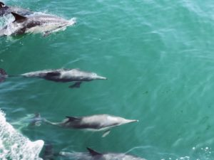 Dolphins, SD