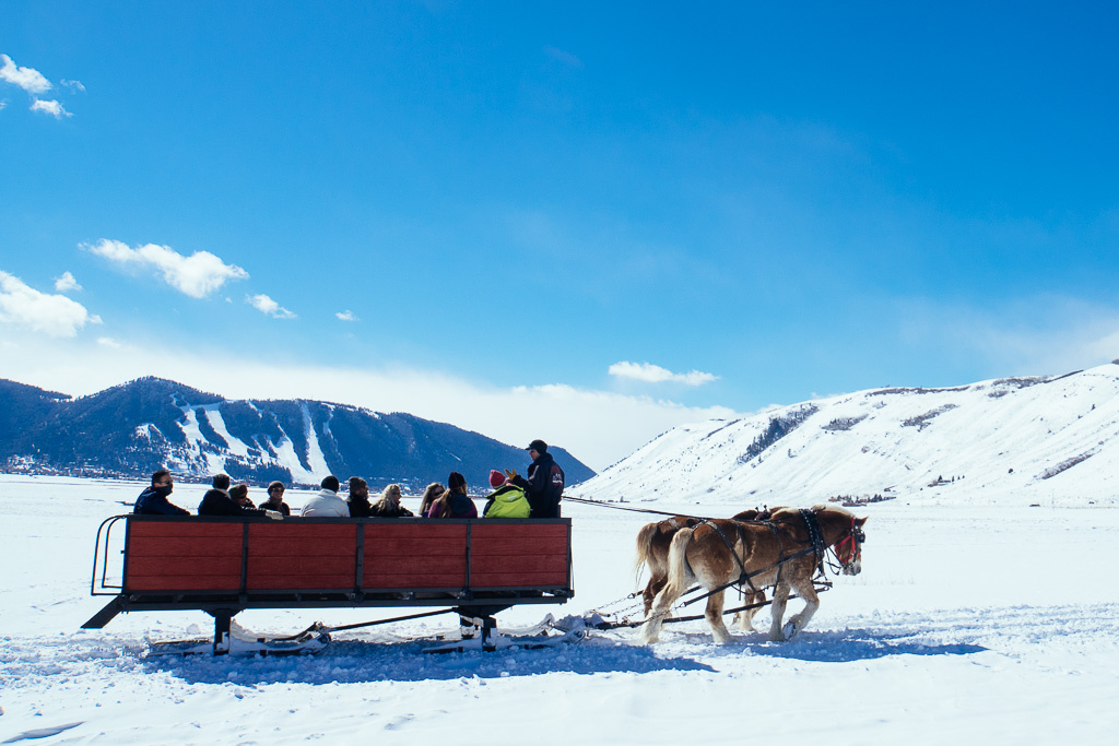 Sleigh Ride in the National Elk Refuge, Jackson Hole