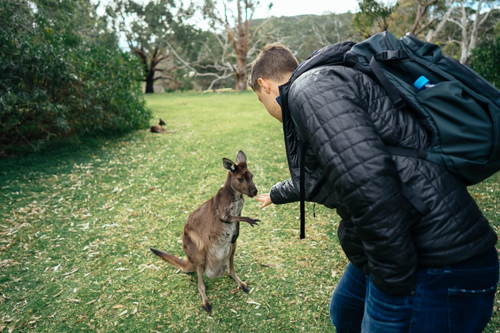 what to do in adelaide